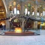 自然史博物館 Natural History Museum