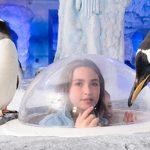ロンドン水族館 Sea Life London Aquarium